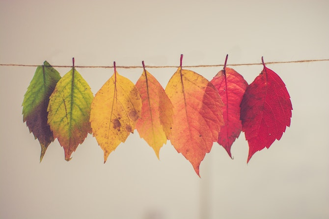 leaves on a string